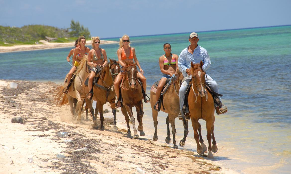 5% group discount on horseback riding trips Grand Cayman, Cayman ...